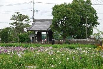 20120701_Shobu02.JPG