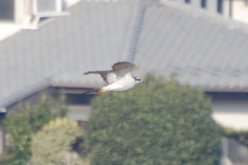 20121215_Otaka02.jpg
