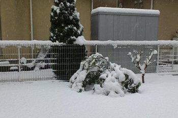 20130114_Snow1.jpg