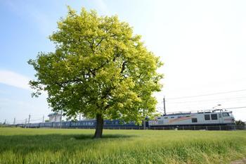 20130504_Hokutosei.jpg