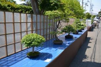 20130505_bonsai02.jpg