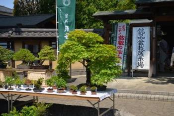 20130505_bonsai03.jpg