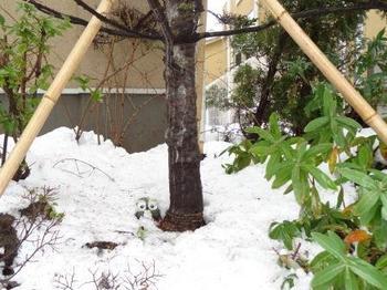 20140215_Snow2.jpg