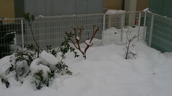 20140215_Snow5.jpg