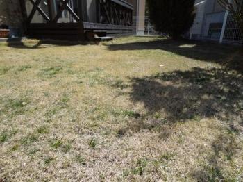 20140315_Lawn1.jpg