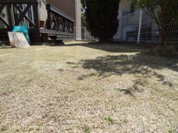 20140315_Lawn2.jpg