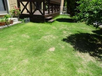 20150530_Lawn.jpg
