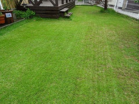 20170813_Lawn3.JPG