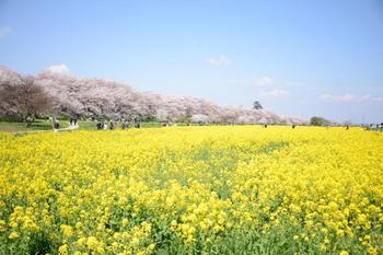 20140406_Gongendo1.jpg
