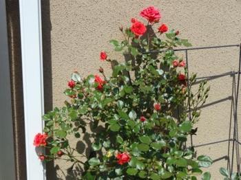 20140510_Garden3.jpg