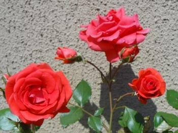 20140510_Garden4.jpg