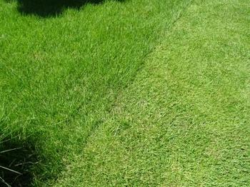 20140802_Lawn02.jpg