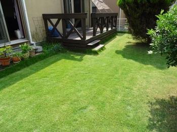20150801_Lawn.jpg