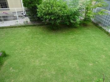 20160702_Lawn1.JPG