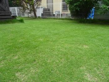 20160702_Lawn2.JPG