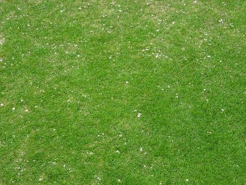 20170813_Lawn1.JPG