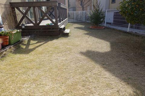 20180218_Lawn1.JPG