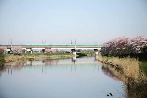 20180331_Sakura.jpg